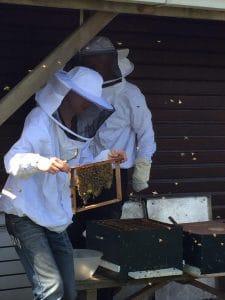 Imker met vriendelijke bijen